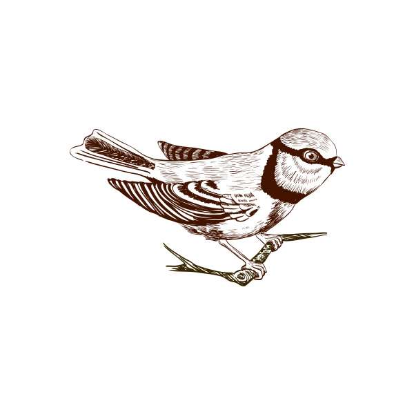 newbird